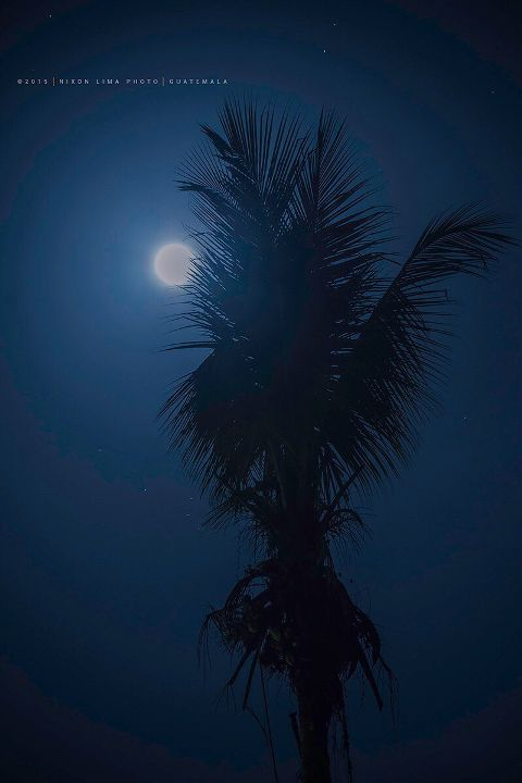 guatemala interesting moon coconut nature
