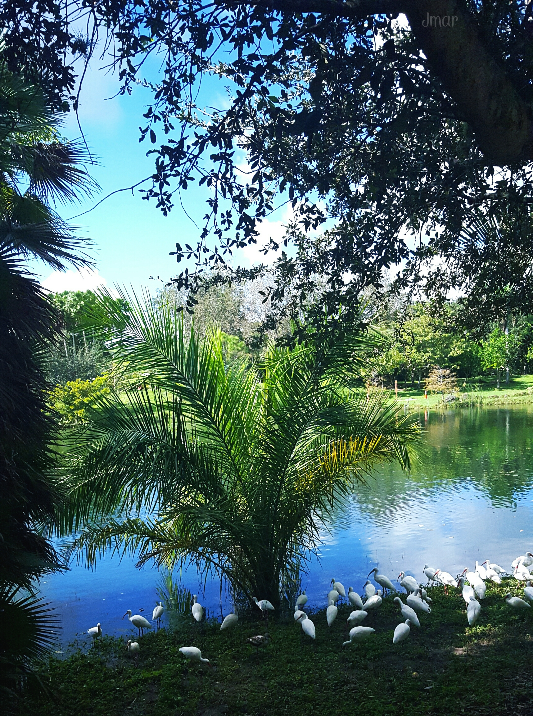 Good Morning Sunshine Vilma Santos : Good morning pa friends sunshine colorful nature seaso