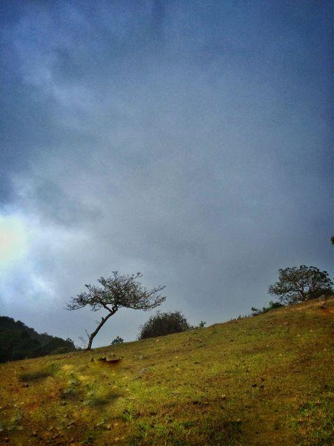 iphone tree guatemala nature travel