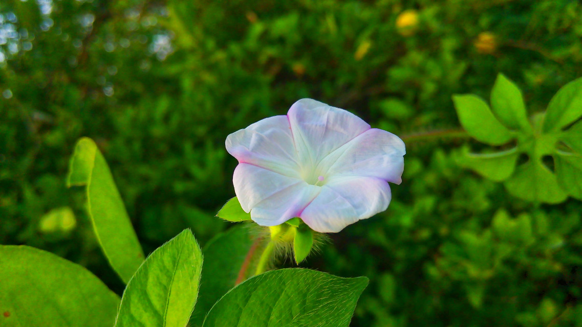 #flower #colorful #nature #photography  #freetoedit