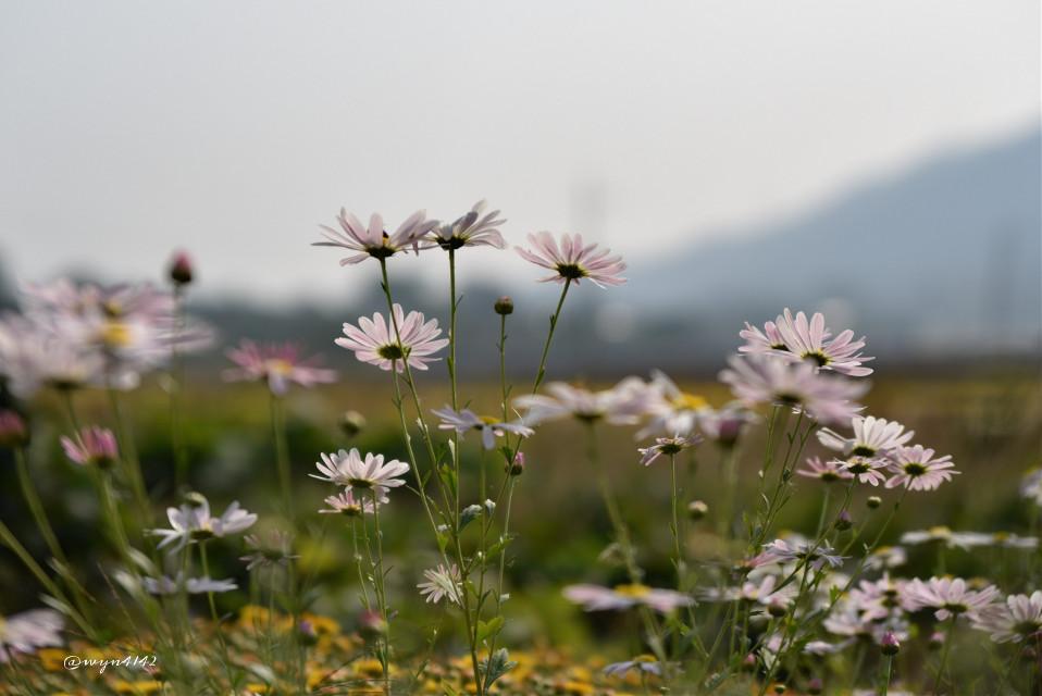 #nature   #flower #Autumn  #mist