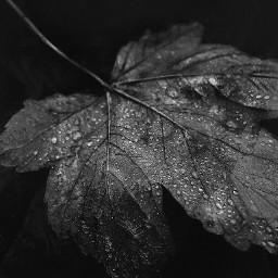 black autumnleaves nature photography