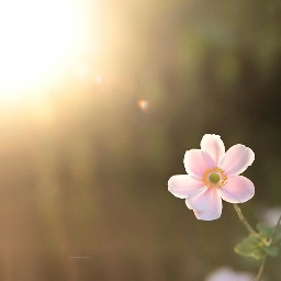 photography nature flower macro summer