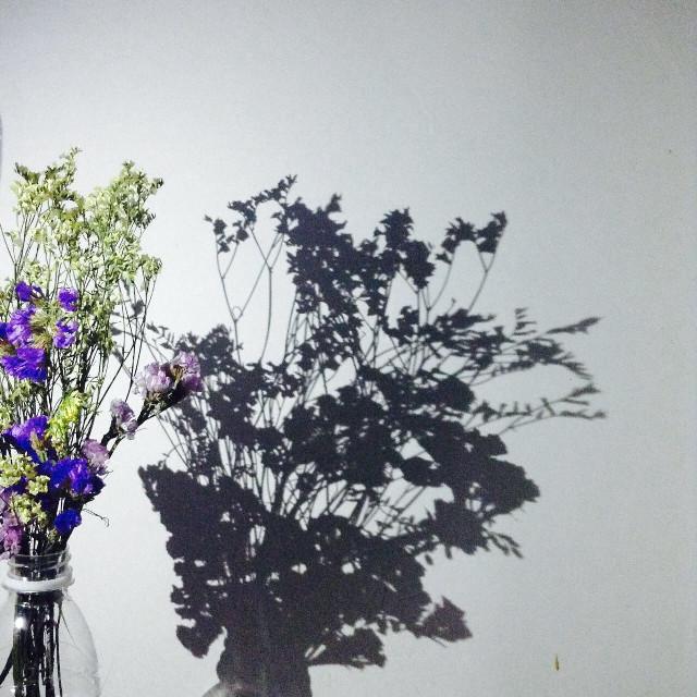 #shadow #flowers #interesting #beautiful #funny