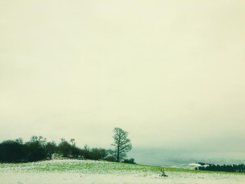 #winter #snow #cold #green #nature #germany #bavaria #roadtrip #white #winterwonderland #wintertime #winterlove #winterbreak