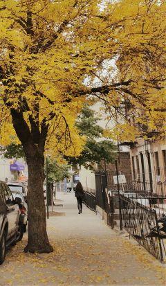 faraway photography fallseason season tree