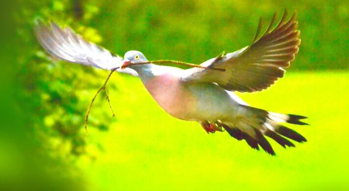 #bird #birds #park #green #birdnest