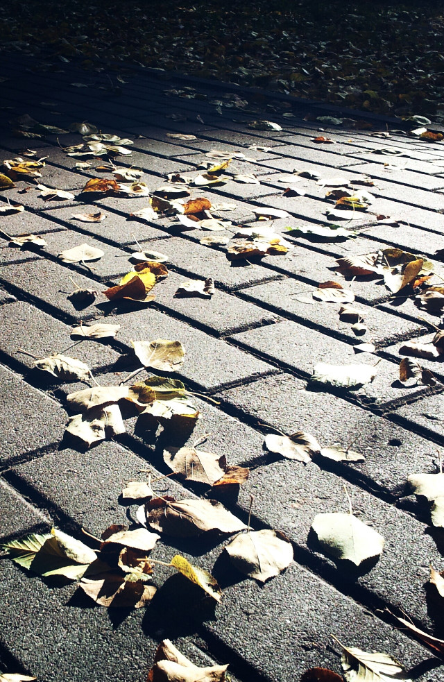 #highcontrast #leaf #photography #nature #road #freetoedit