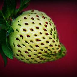 vignette crisp strawberry fruit