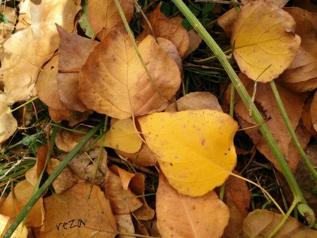 Photography#foliage