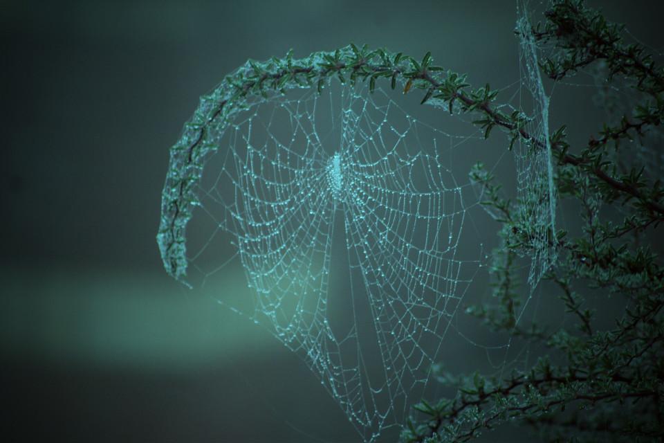#lomoeffect  #spiderweb