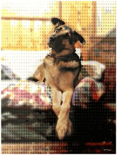 dog petsandanimals puppy wppanimals mypet