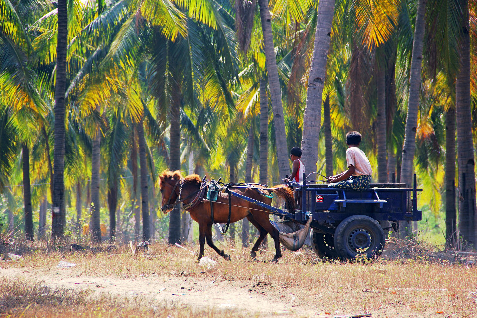 Palm plantation in Indonesia.➰