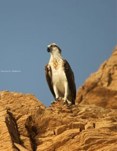photography petsandanimals nature birds travel