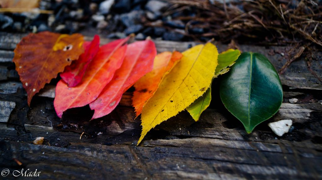 This is image is in the wppfallcolors contest. Please vote for it! #wppfallcolors #nature #photography #colorful #fall  #beautiful #leaves