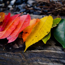 wppfallcolors nature photography colorful fall