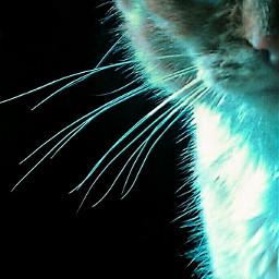 cat black love petsandanimals