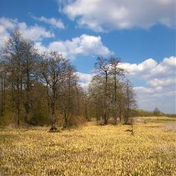 kursk forest suburb курск spring