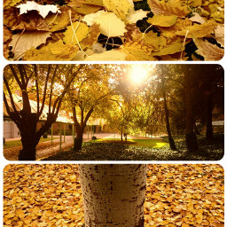 wapcollage collage cute colorful nature