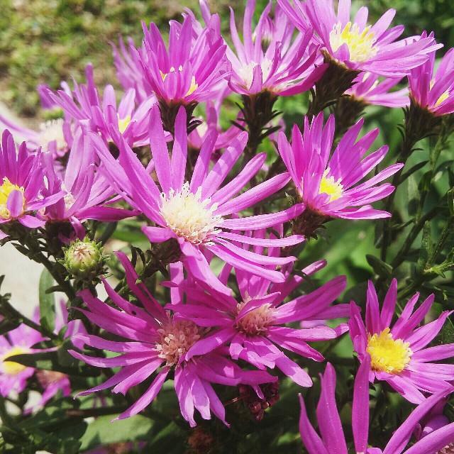 #nature #flower #photography #beautiful #fuchsia #feminim