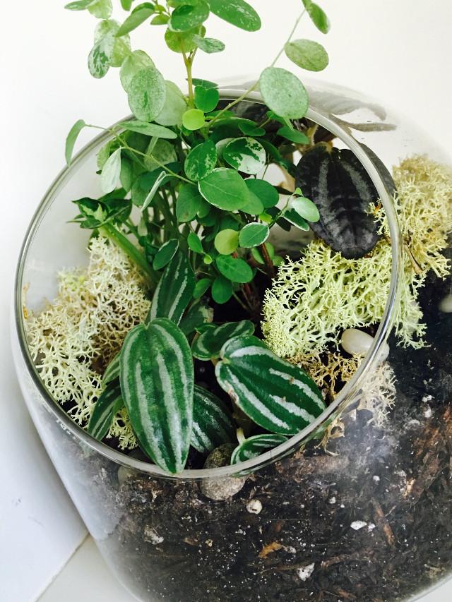 #terrarium #succulents #nature