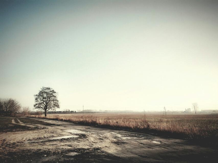 #landscape #heaven #travel #tree #photography #nature #road