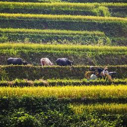 stripes landscape farmlife farm cultivate