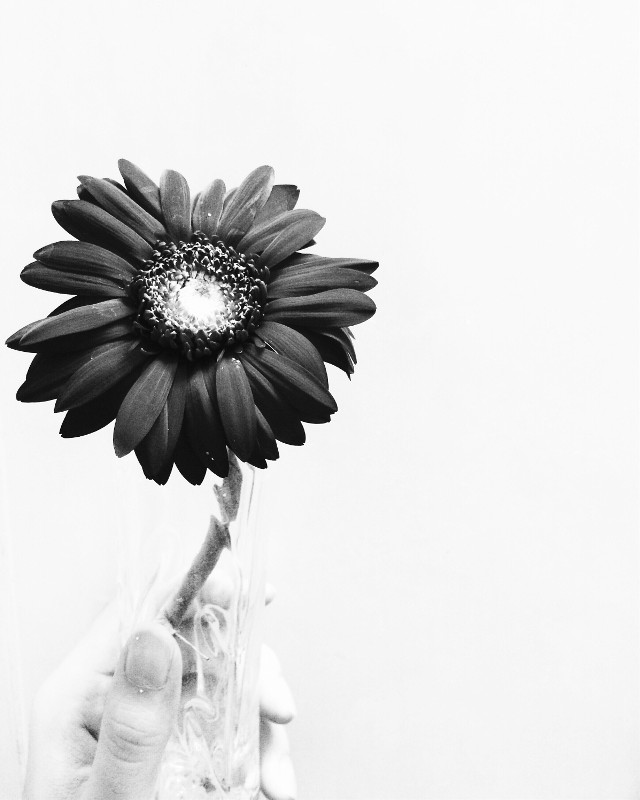 #picsart #LanNg #photography #photo #blackandwhite #flower