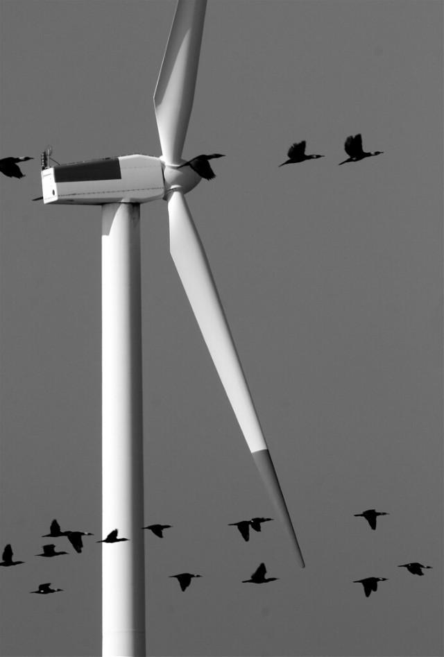 風力発電と鵜