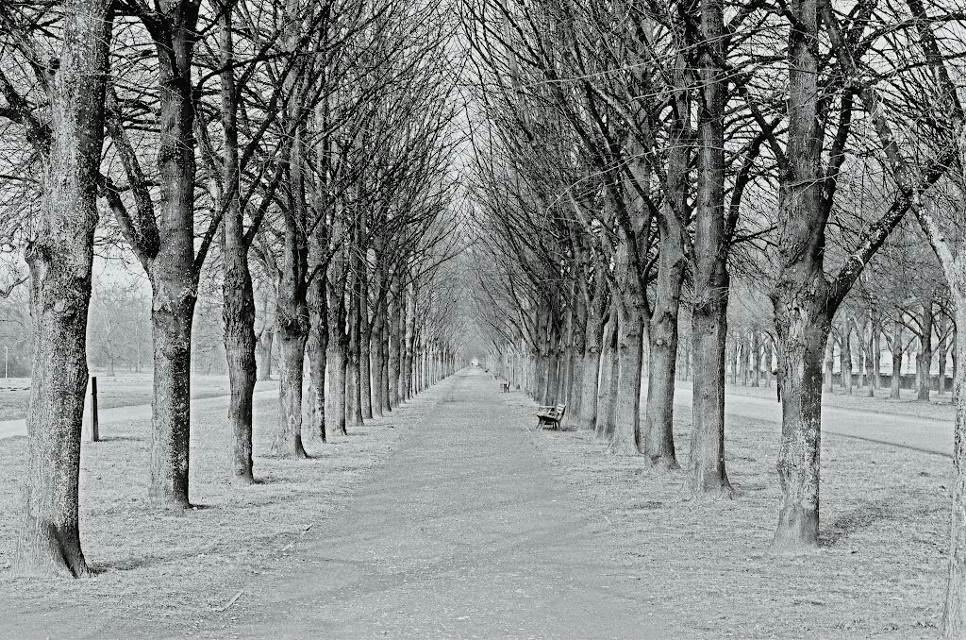 I'm on my way...  #freetoedit #blackandwhite #trees #way