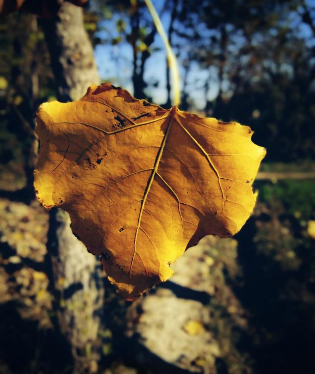 #photography #nature  #leaf #yellow #closeup