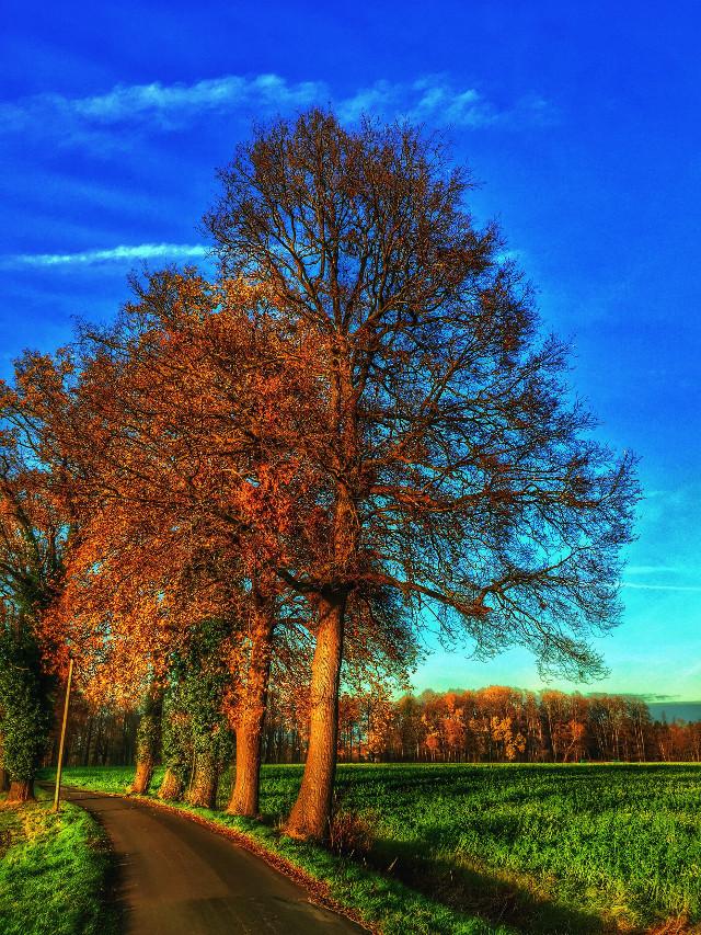 #crispeffect  #sun #trees #afternoon #naturephotography #walk #love #emotion #spaziergang  #horizon #sky #clouds #nature #ftenature #landscape #plants #view #season  #luxxxs