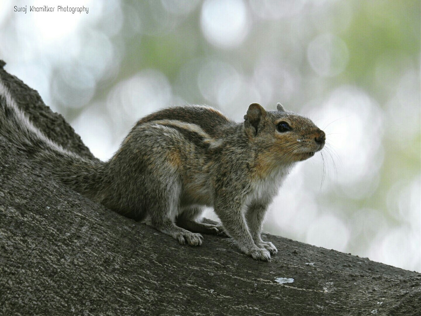 #squirrel #nat #nature #photography