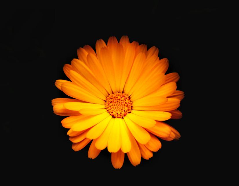 #photography #flower #nature  #lightanddark