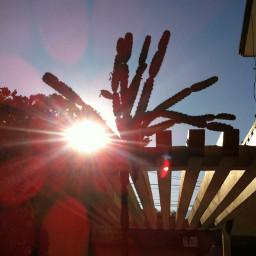 sun beautiful cactus naturaleza life