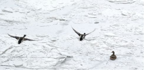 snow moscowriver moskvariver birds love