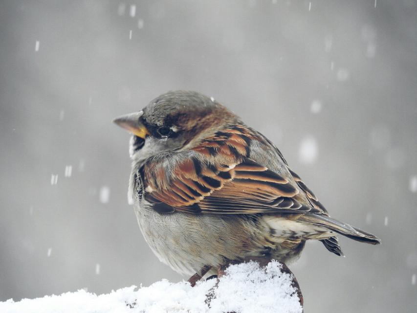 #bird #snow #winter
