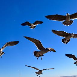 nature landscape art seagull flock