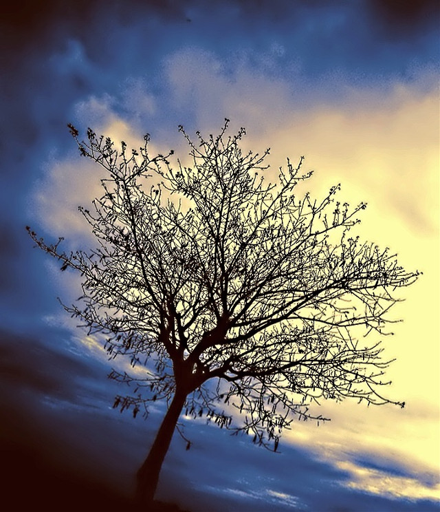 #old #picture #found #tree #without #leaf #dramatic