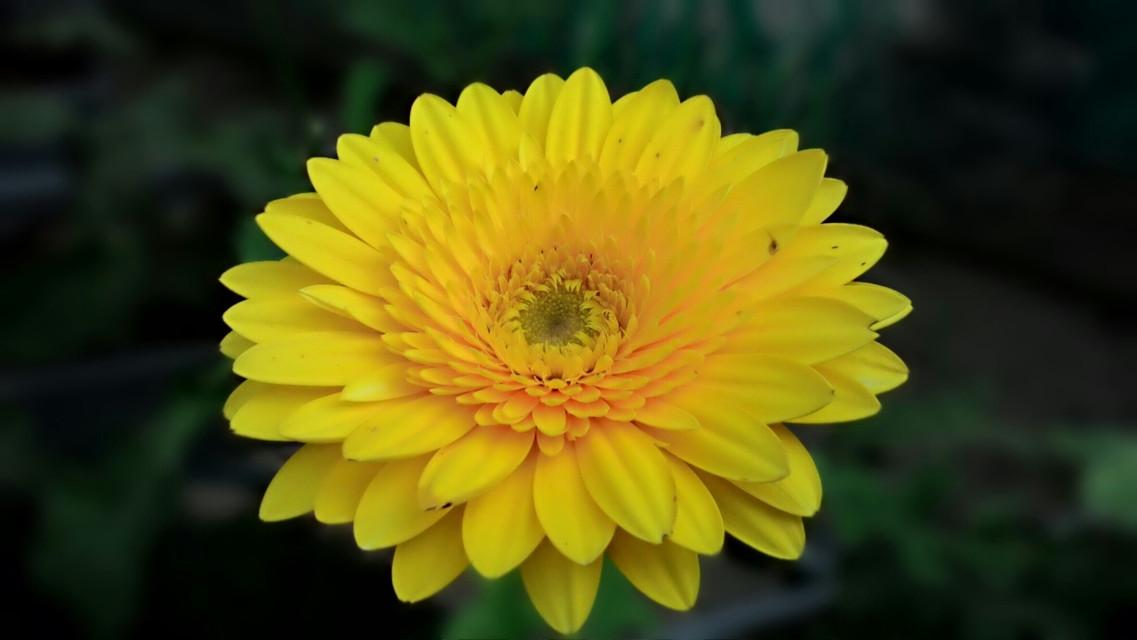 #flower  #nature