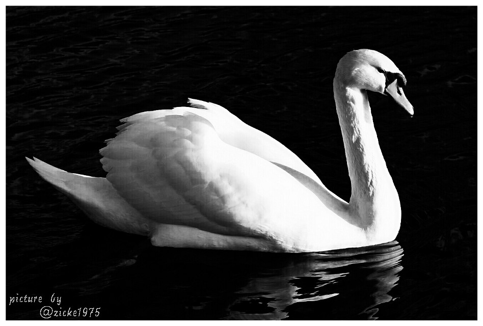 Picture by @zicke1975 edit by me. Thank you very much my dear! #blackandwhite #nature #petsandanimals #photography
