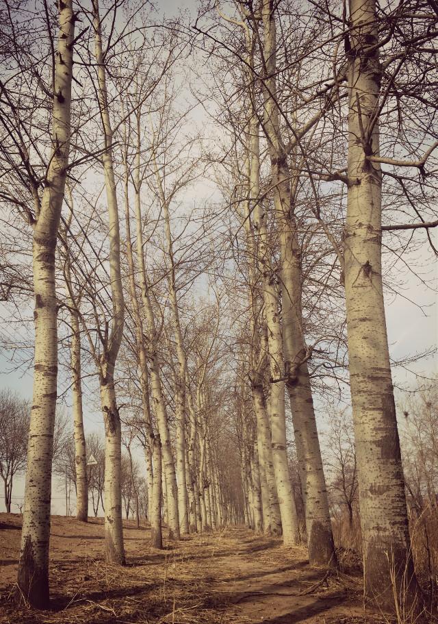 #interesting #trees #iphonephotography #nature #freetoedit