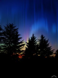 northernlights clipart multiple sky trees
