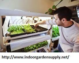 hydroponics carbondale