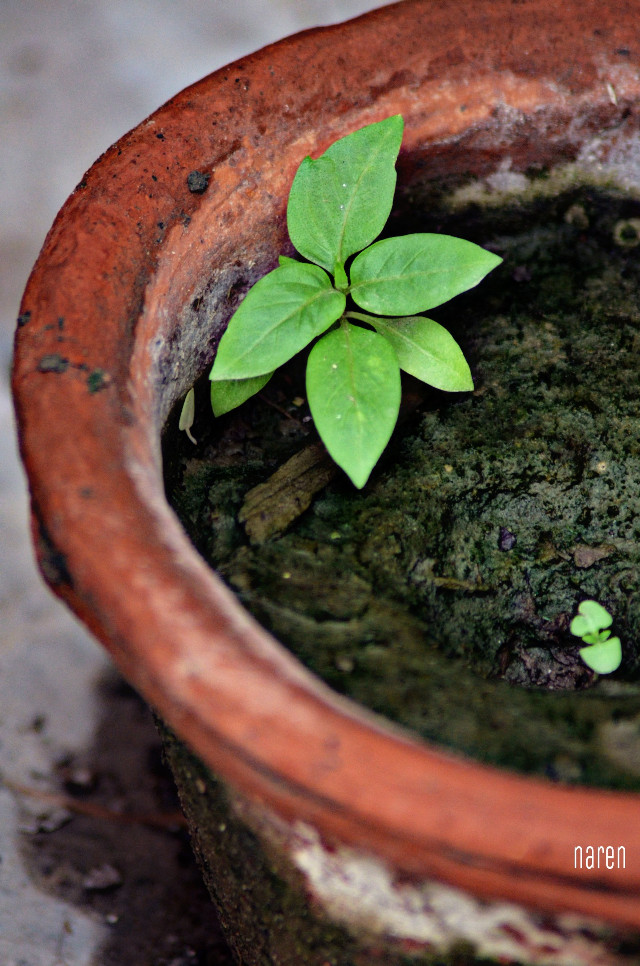Baby plant with its parent  #plant  #Baby  #nature #nature #hdr #cute #emotions  #minimal