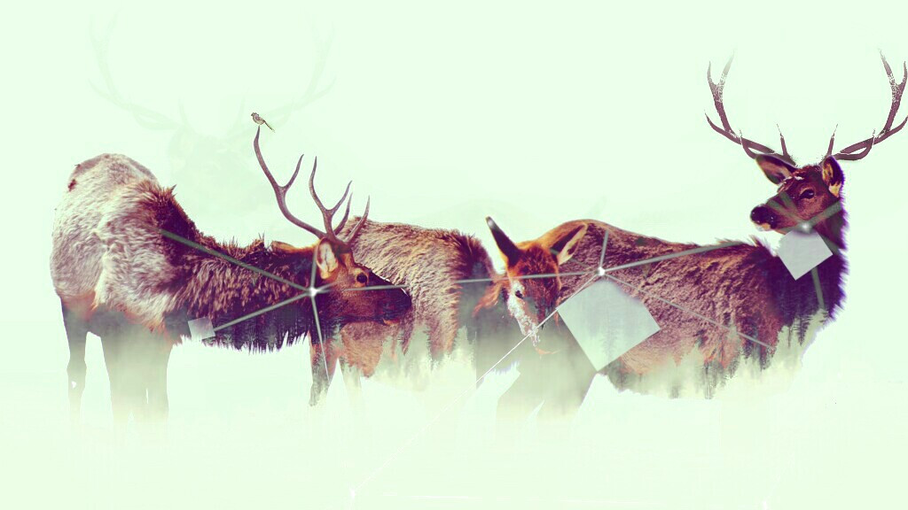 Dear deers! For @highjumper-2  #minimal #abstract #deers #freetoedit #nature #doubleexposure #animals #vintage #lines #squares #abstract #emotions #petsandanimals #snow #emotions #surreal
