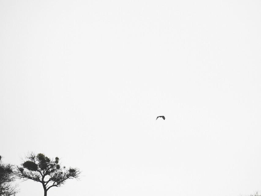 #minimal #nature  #photography