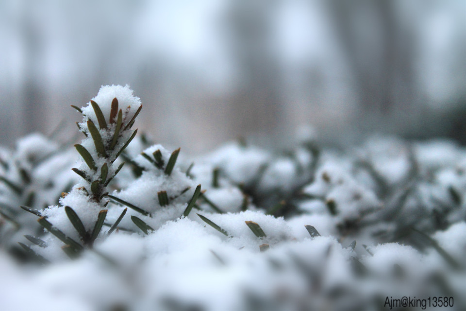 #tiltshift #wppwhite   Featured pic. One may have enough information but the job doesn't end here, it is important to have right selection.#softfocus #dpcwinter #dpcsnow #pcitssnowing