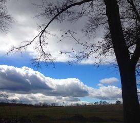 blueskies trees clouds
