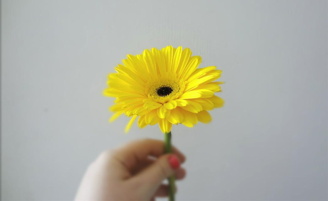 # flower  #love  #music